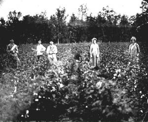 aa-picking_cotton.jpg